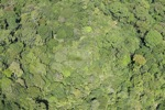 Borneo rainforest in Malaysia -- sabah_1879