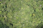 Borneo rainforest in Sabah -- sabah_1880
