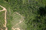 deforestation for oil palm -- sabah_1882