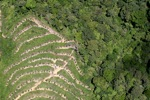 deforestation for oil palm -- sabah_1883