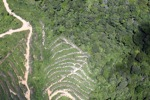 deforestation for oil palm -- sabah_1884