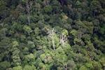 Rainforest in Borneo -- sabah_1888