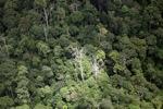 Rain forest in Borneo -- sabah_1889