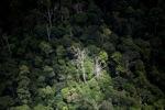 Malaysian Borneo forest -- sabah_1891