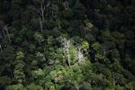 Rainforest in Malaysian Borneo -- sabah_1892