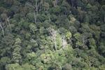 Rain forest in Malaysian Borneo -- sabah_1893