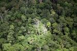 Jungle in Malaysian Borneo -- sabah_1894