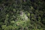 Malaysian Borneo forest -- sabah_1898