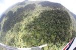 Forest in Sabah, Malaysia -- sabah_1901