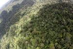 Borneo rainforest in Malaysia -- sabah_1903