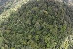 Borneo rainforest in Sabah -- sabah_1904
