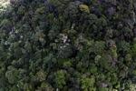 Rain forest in Borneo -- sabah_1907