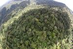 Malaysian Borneo forest -- sabah_1909