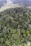 Rain forest in Malaysian Borneo -- sabah_1911
