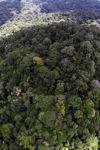 Jungle in Malaysian Borneo -- sabah_1912