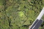 Malaysian Borneo forest -- sabah_1916