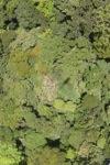 Forest in Sabah -- sabah_1918
