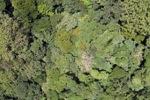 Forest in Sabah, Malaysia -- sabah_1919