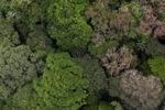Borneo forest -- sabah_1923