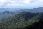 Rainforest in Borneo -- sabah_1924