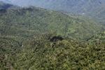 Rain forest in Borneo -- sabah_1925