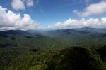 Rainforest in Malaysian Borneo -- sabah_1928