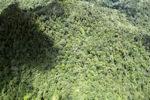 Borneo rainforest in Malaysia -- sabah_1939