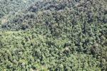 Borneo rainforest in Sabah -- sabah_1940
