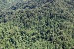 Borneo forest -- sabah_1941