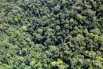 Rainforest in Borneo -- sabah_1942