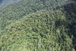 Malaysian Borneo forest -- sabah_1945