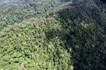 Rain forest in Malaysian Borneo -- sabah_1947