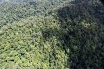 Jungle in Malaysian Borneo -- sabah_1948