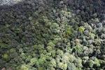 Malaysian Borneo forest -- sabah_1952