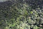 Forest in Sabah -- sabah_1954