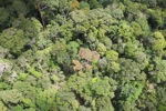 Forest in Sabah, Malaysia -- sabah_1955