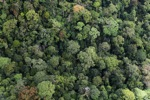 Borneo rainforest in Malaysia -- sabah_1957
