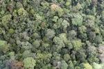 Borneo rainforest in Sabah -- sabah_1958
