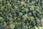Rainforest in Borneo -- sabah_1960