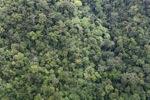 Rain forest in Borneo -- sabah_1961