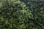 Malaysian Borneo forest -- sabah_1963