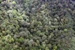 Rainforest in Malaysian Borneo -- sabah_1964
