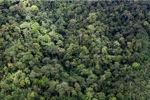 Jungle in Malaysian Borneo -- sabah_1966