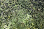 Malaysian Borneo forest -- sabah_1970