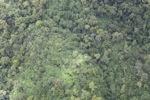 Forest in Sabah -- sabah_1972