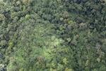 Forest in Sabah, Malaysia -- sabah_1973