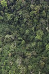 Borneo rain forest -- sabah_1974