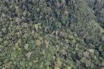 Borneo rainforest in Malaysia -- sabah_1975
