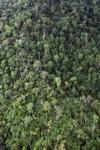 Borneo rainforest in Sabah