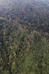 Borneo forest -- sabah_1977